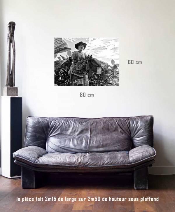 La récolte-tirage en situation-80 x 60- Cuba, au delà des couleurs par Justine Darmon